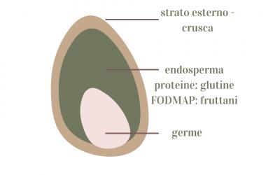 Il protocollo FODMAP è una dieta priva di glutine?